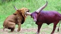 Схватки диких животных кто сильнее и кто из них победит