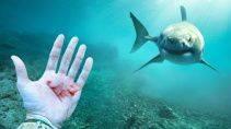 Что произойдет если пустить кровь рядом с акулой