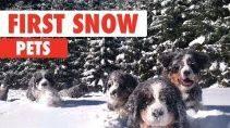 Как животные реагируют на снег