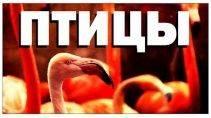 Галилео - Зоопарк. Птицы