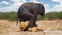 Битвы животных за свое выживание от голода