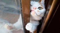 😻Кошки и 🐶Собаки - Удивительные видео о жизни животных