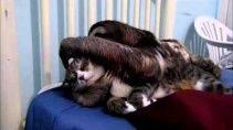 Кот и ленивец