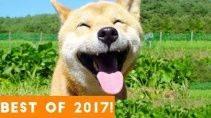 Лучшие приколы с животными за 2017 год