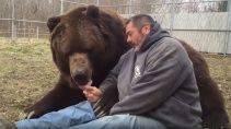 Когда медведь твой друг