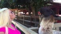 Блондинка и лама в зоопарке