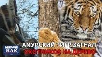 Тигр загнал охотников на дерево и сделал их штаны мокрыми