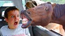 Лучшие смешные ролики с домашними животными 2020 года