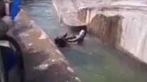 Турист попытался утопить медведя в зоопарке