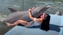 Озабоченный дельфин напал на красивую туристку