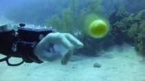 Что будет если разбить яйцо под водой