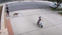 Реакция мужчины на мальчика который катался велосипеде в его дворе
