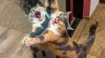 Забавные кошки и собаки смешат своих хозяев