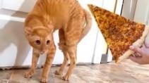 Кошки и собаки не шутят когда дело касается еды