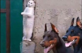 Кто кого обижает или кто в доме хозяин кошка или собака