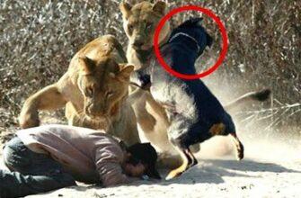 Интересные кадры спасения животными других животных и людей