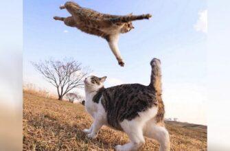 Кошки которые постоянно радуют своих хозяев