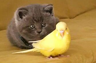 Забавный котенок с попугайчиком боятся друг друга
