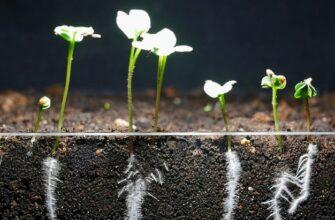 7 дней выращивания редиса: страшно интересное видео