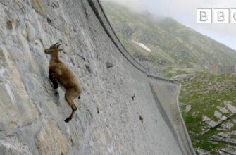 Этот козёл не знает что такое гравитация