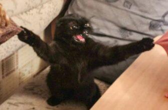 Кошки и собаки которые очень странно себя ведут