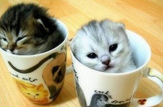 Симпатичные котята делают забавные вещи - видео про котят