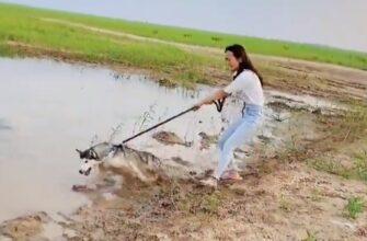 Неудачно погуляла с собакой у водоема