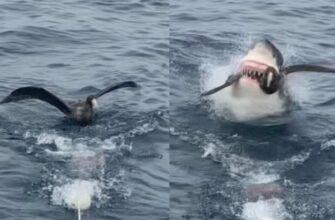 Акула схватила птицу и утащила на дно