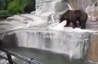 Пьяный мужчина забрался в вольер к медведям