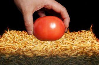10000 мучных червей против помидора