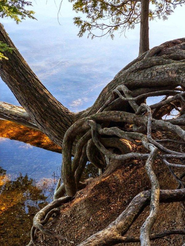 Природа здесь играет по своим правилам (18 фото)