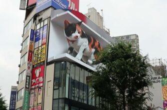 Гигантский кот на рекламном экране в Синдзюку в Токио