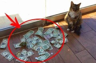 Кот приносил каждый день кучу денег, где он их брал показала видеокамера