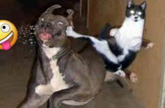 Кота оставили со своим потомством и вот что произошло...