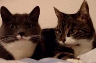 Два кота обсуждают планы на вечер