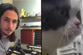 Музыкальный шедевр с мяукающим котом от The Kiffness