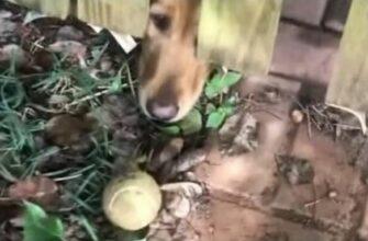Пес расстроился из за улетевшего за забор мяча