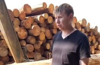 Вот почему весь российский лес уходит на экспорт