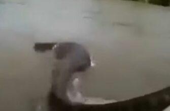 Мужчина пытается удержать огромную анаконду