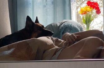 Реакция собаки на незнакомую женщину в постели хозяина