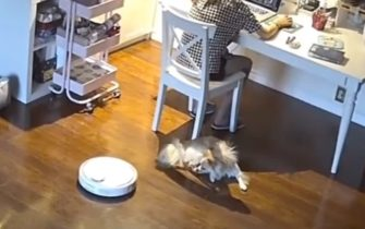 Робот-пылесос решил что собака это мусор и засосал её