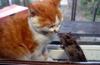 Смешная реакция кошек на других животных