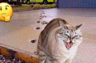 Смешные видео про кошек, которые все портят