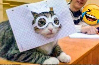 Сумасшедшие кошки которые все портят Это надо видеть