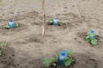 Как вырастить огурцы ёлочкой