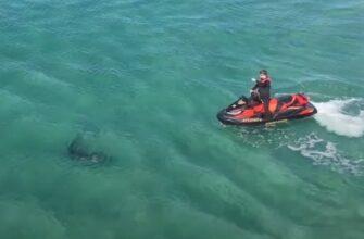 В Австралии 3-х метровая акула напала на мужчину на гидроцикле