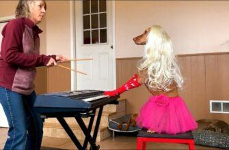 Четвероногий маэстро играет на пианино не хуже профессионала / Лучшие ролики 2021