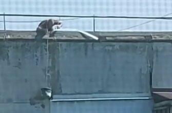 Экстремальное спасение кота попавшего в беду