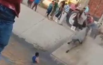 Корова напала на людей которые ее спасли