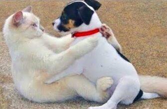 Кошки которые ненавидят собак